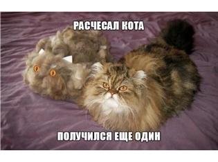 Приколы про котов » DreemPics.com - картинки и рисунки на ...