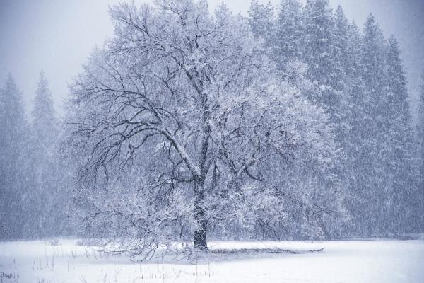 Деревья в снегу - картинки, фото » DreemPics.com ...