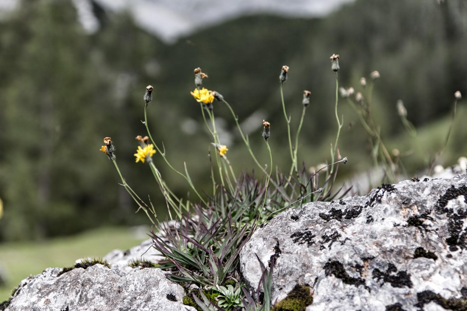 Dachstein - Tauern Part 5_3