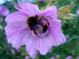 bumble-bee in heaven