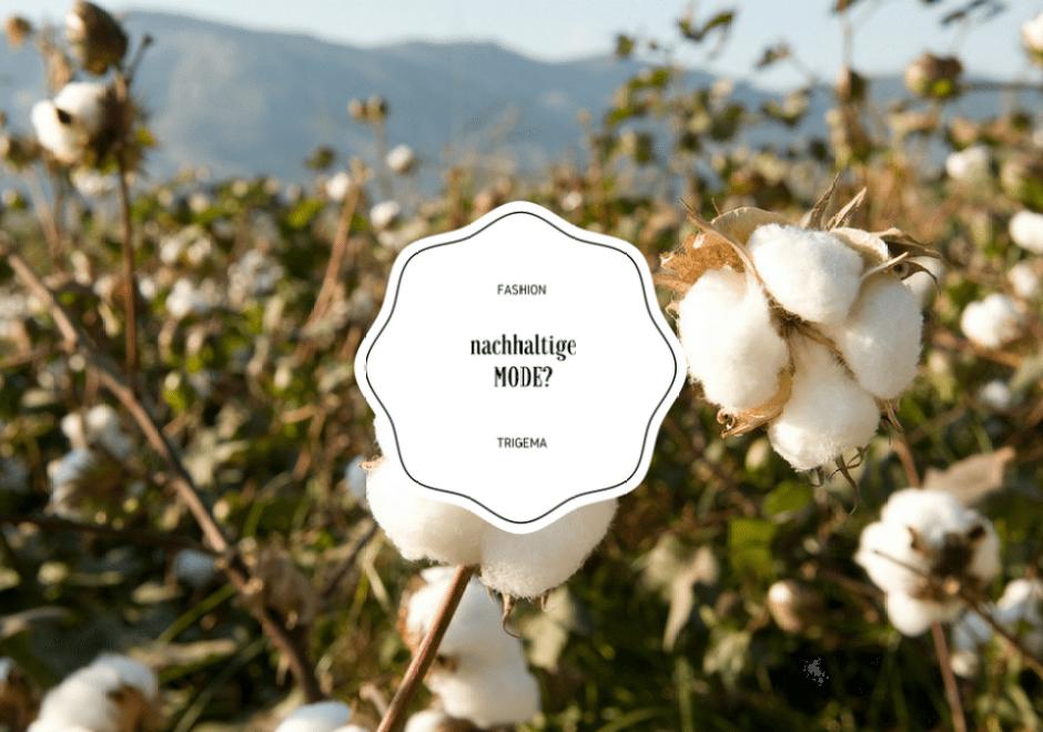 Kann Nachhaltigkeit auch Fashion sein? TRIGEMA...
