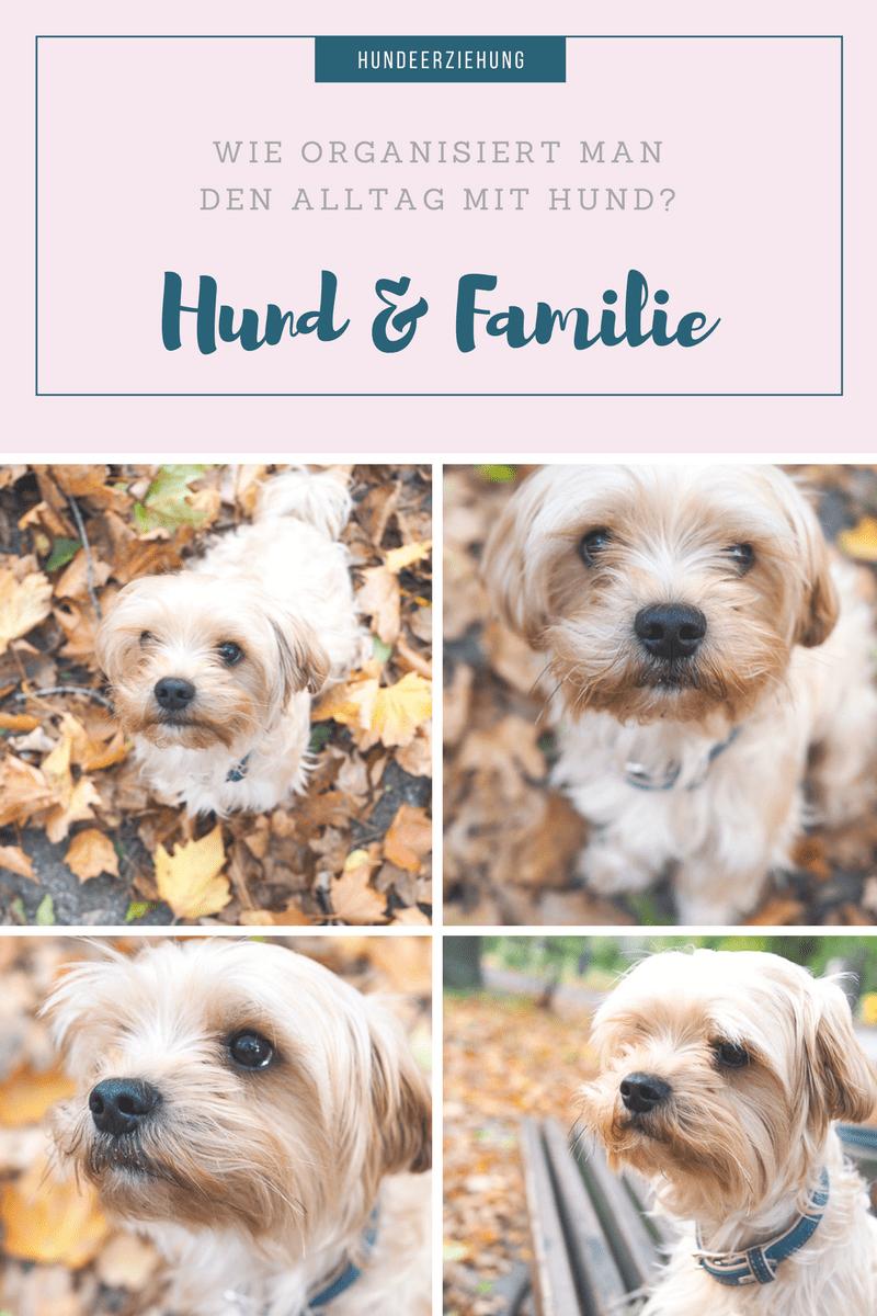 Hundefutter Test mit Wildborn Softjewel! Die Anschaffung eines Hundes und wie man den Alltag mit einem Hund organisiert?