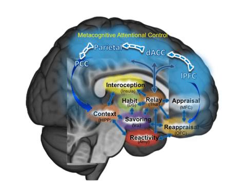 mindfulness centered regulation