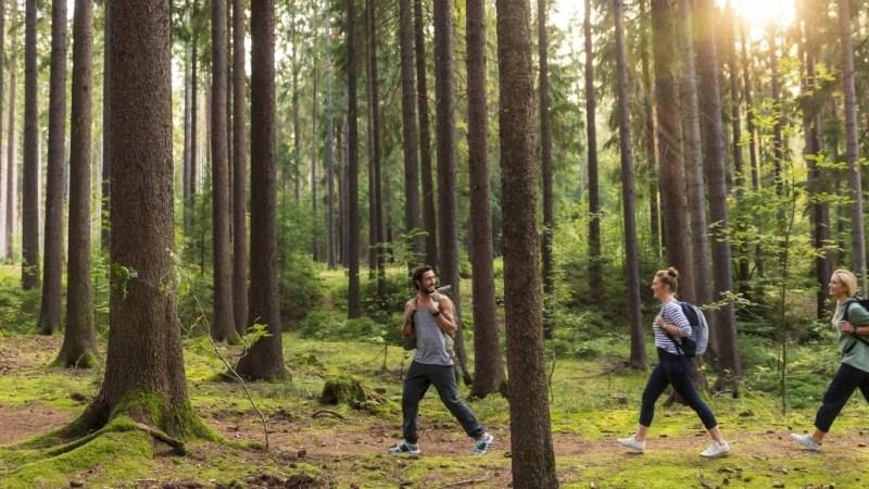 Natur entdecken in Dresden Elbland