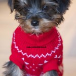 Puppies Outfits Dress The Dog Clothes For Your Pets