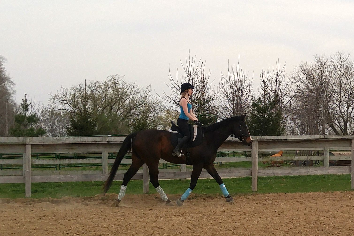 Getting Your Horse Responsive to Light Aids
