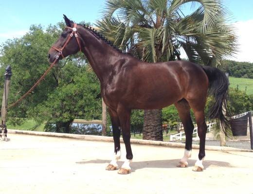 Inter 1 schoolmaster for sale