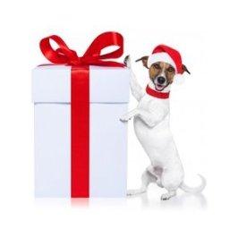 tester le qi de son chien dresser son comment dresser son chien. Black Bedroom Furniture Sets. Home Design Ideas