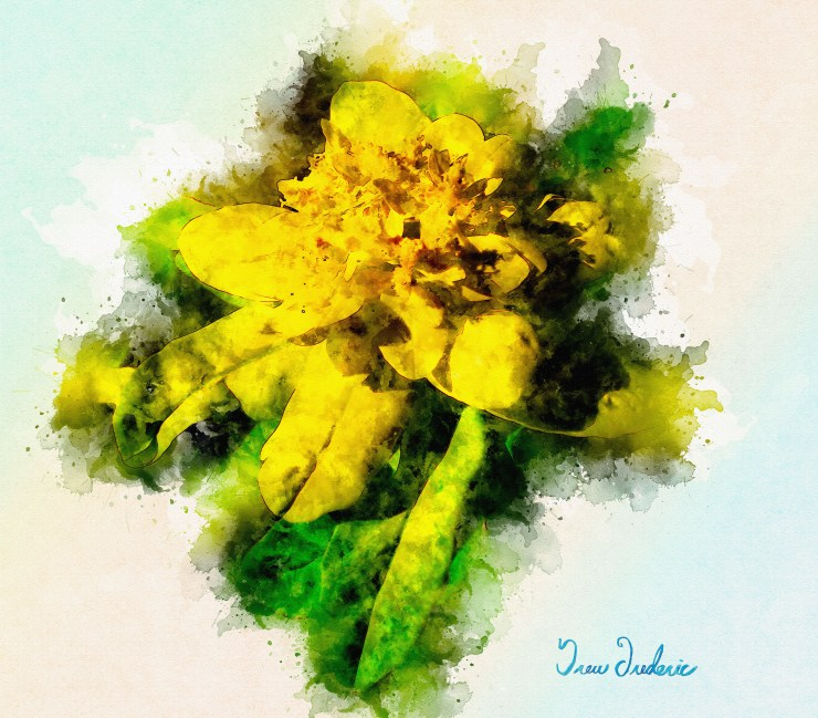 Yellow Flower Watercolor B with siggy IMG_0219