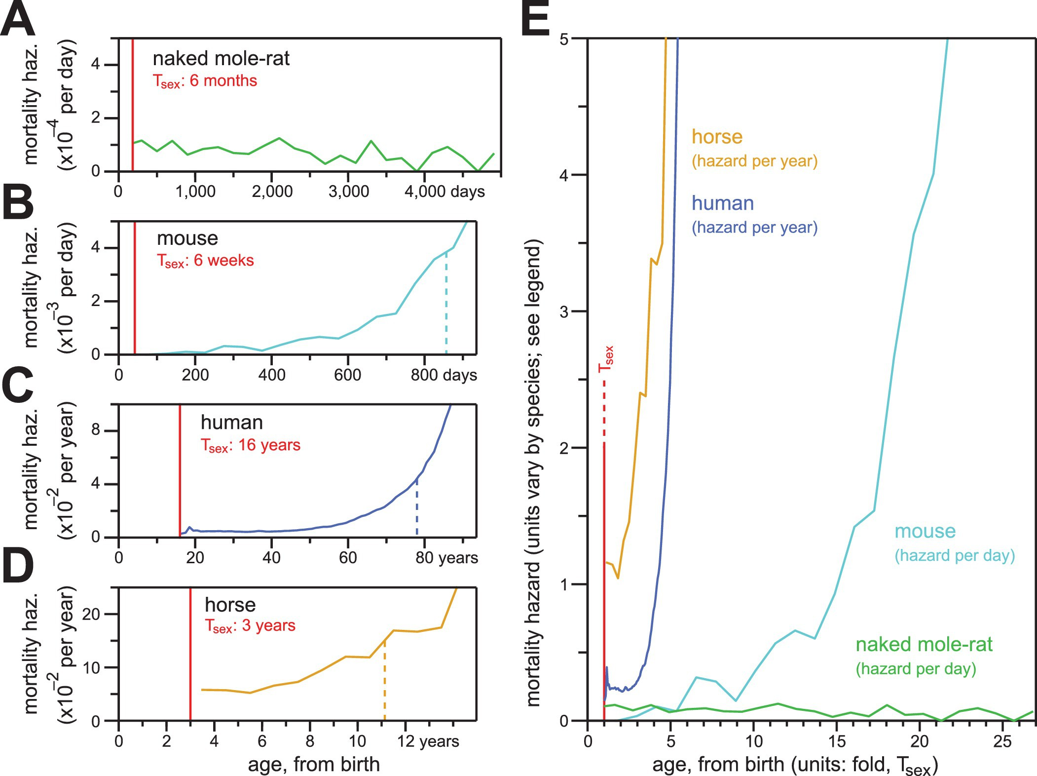 (PDF) Response to comment on Naked mole-rat mortality