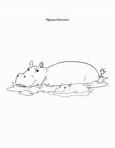Sheba coloring book hippo