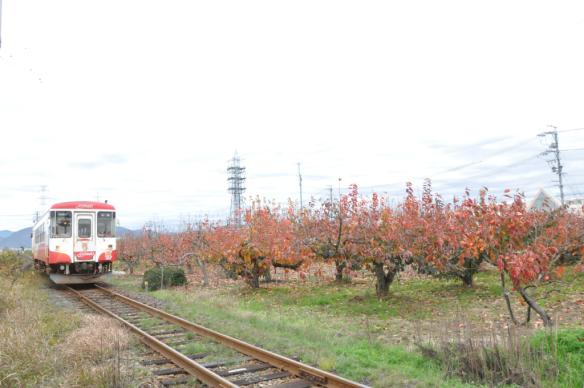 樽見鉄道DSC_6711