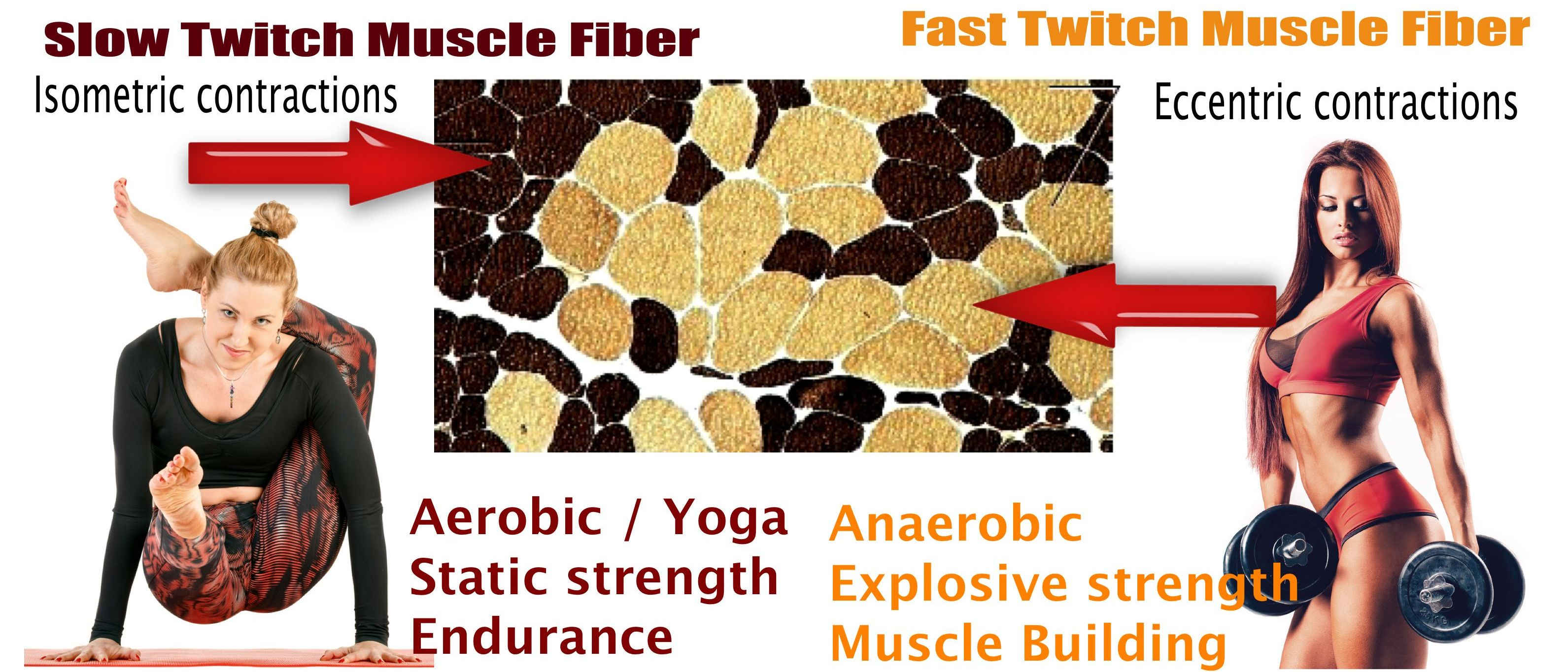 Strength Training Vs Yoga And Aerobics The Difference