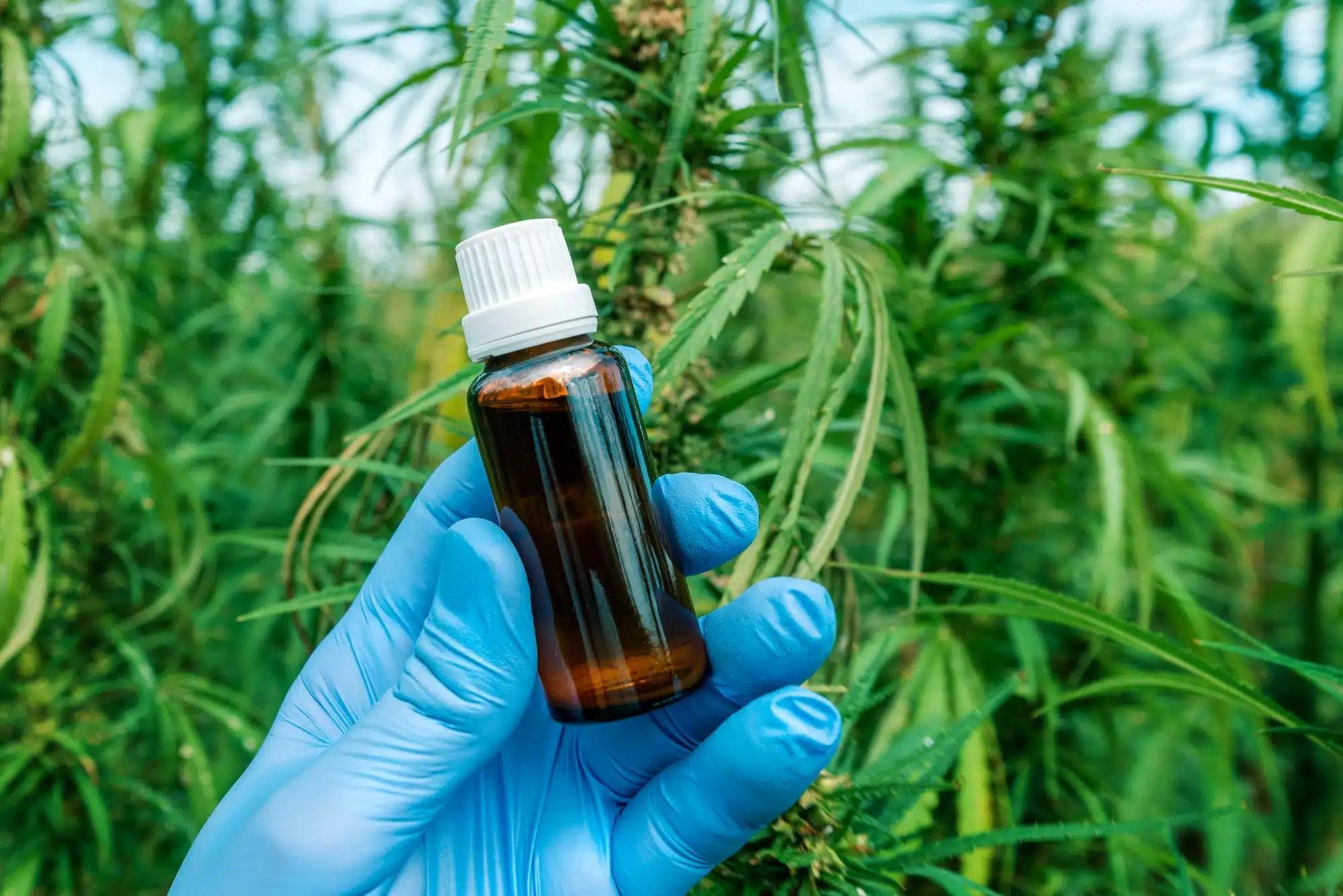 Scientist holding CBD cannabis oil bottle, close up
