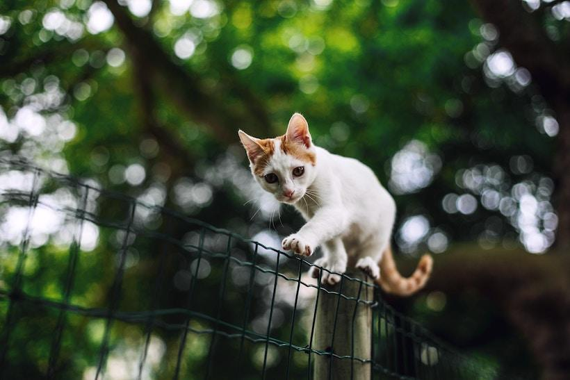Cat balancing on a fence