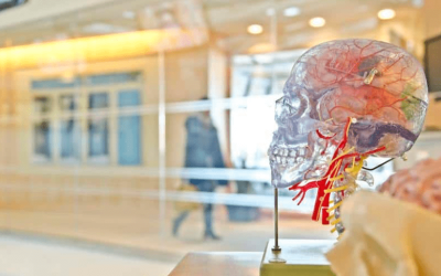 Can You Really Make Yourself Smarter? Biohacking Your Brain