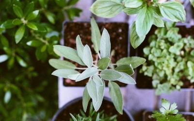 Health Coach Tip – Grow an Herb Garden