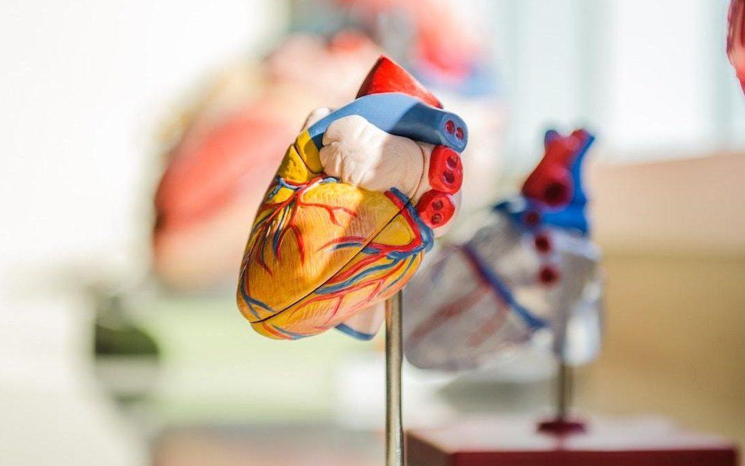 A Healthy Gut Makes a Healthy Heart