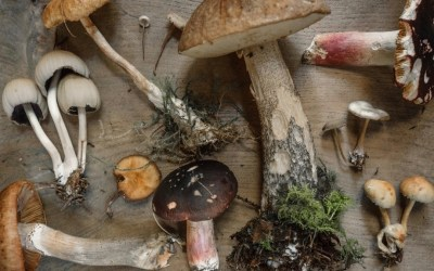 How To Get Started With Medicinal Mushrooms