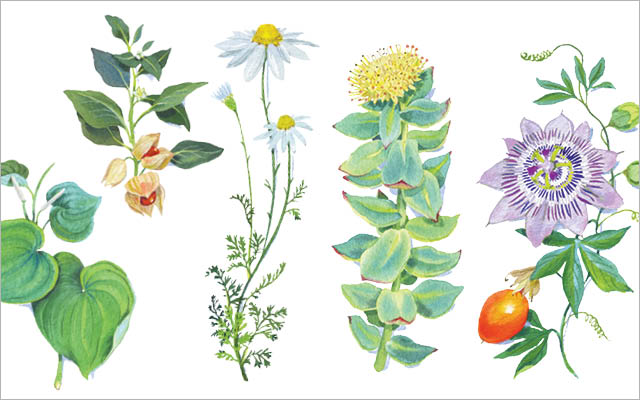 5 Herbs For Anxiety Frank Lipman Md