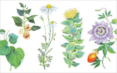 5 Herbs for Anxiety