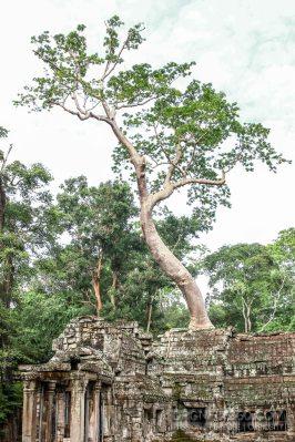 Cambodia 2015 LowRes-146