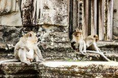 Cambodia 2015 LowRes-60