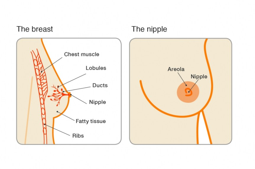 breast_nipple_illustration_0