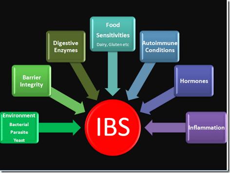 IBS Model Dr Hagmeyer