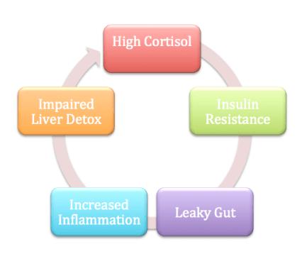 hormone imbalance cycle