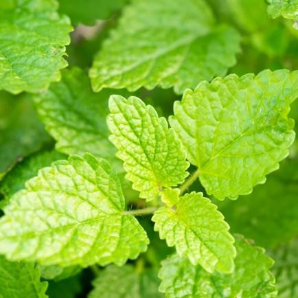 Garden Update - Herbs