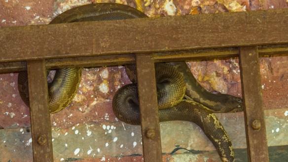 snake in back door grill