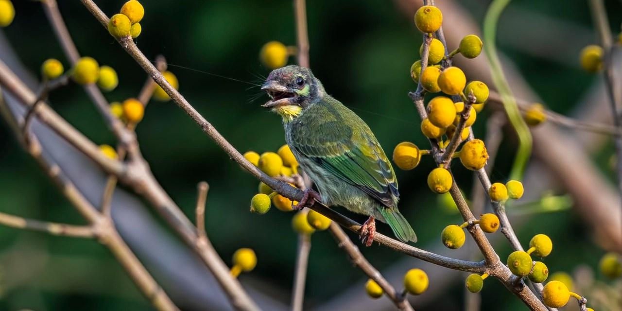 Of Birds, Butterflies and other Beauties