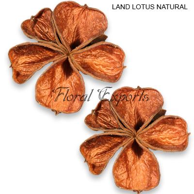 Land Lotus Natural Loose - Dried Parts of Plants Wholesale Supplies
