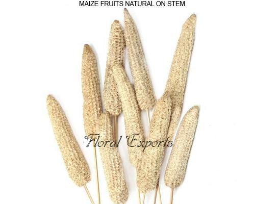 Maize Fruits Natural - Dried Flowers Bulk Supplies