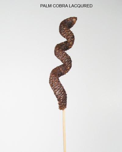 Palm Cobra Lacquered