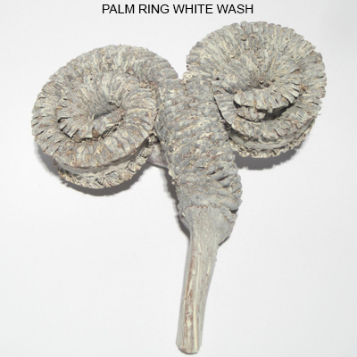 Palm Ring Natural White Washed (Frosted)