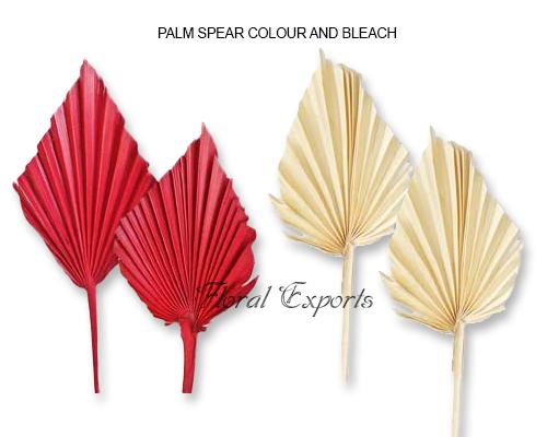 Palmspear Color-Bleach