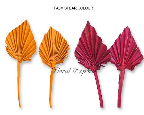 Mini Palm Spear Color