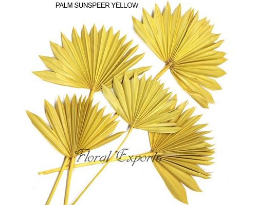 Palm Sunspear Yellow