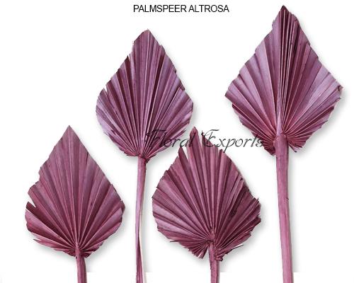 Palm Spear Altrosa
