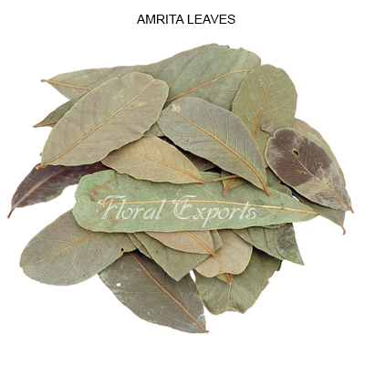 Amrita Leaves Natural - Bulk Dried Amrita Leaves Wholesale