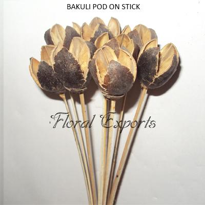 Bakuli Pods on Stem