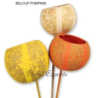 Bell Cup Pumpkin Mix Colour on Stem