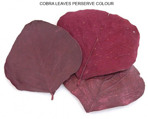 Cobra Leaves Preserve Red