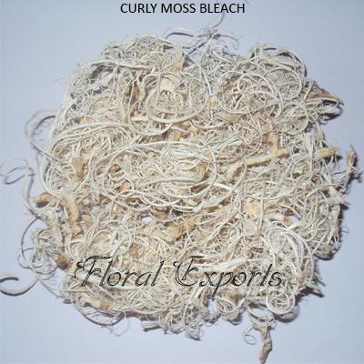 Curly Moss Bleach