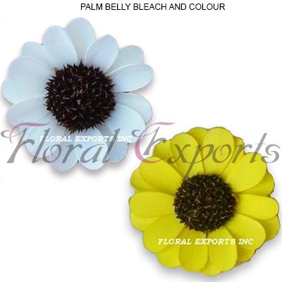 Palm Beli Colour & Bleach Wholesale