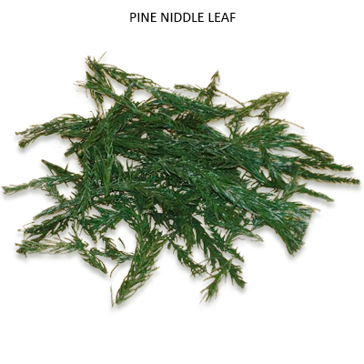 Pine Niddle Leaves - Dried Decorative Leaves Wholesale