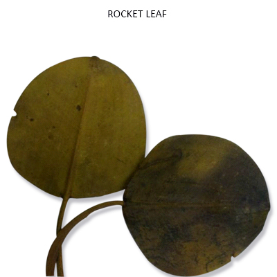 Rocket Leaves Natural - Bulk Dried Leaves Wholesale