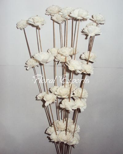 Sola Beli 2cm on Coco Stick - Decorattive Sola Sticks Wholesale